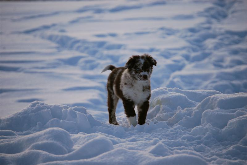 rocki-puppy