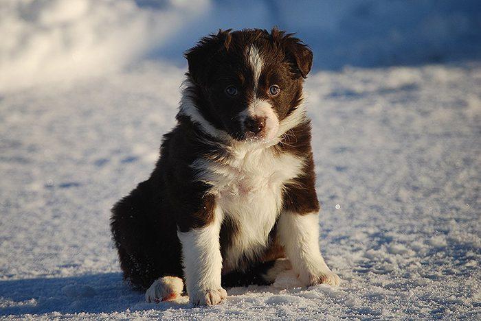 hicka-pup